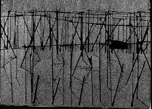 Hopfen, cinefoil perforated, light, wood, 21 x 29,5 cm